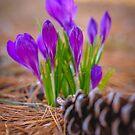 Happy Easter by alan shapiro