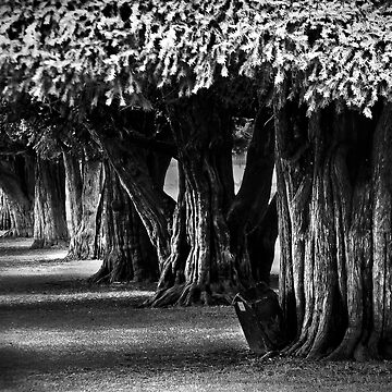 Hampton Court Gardens by GreenEyedHarpy