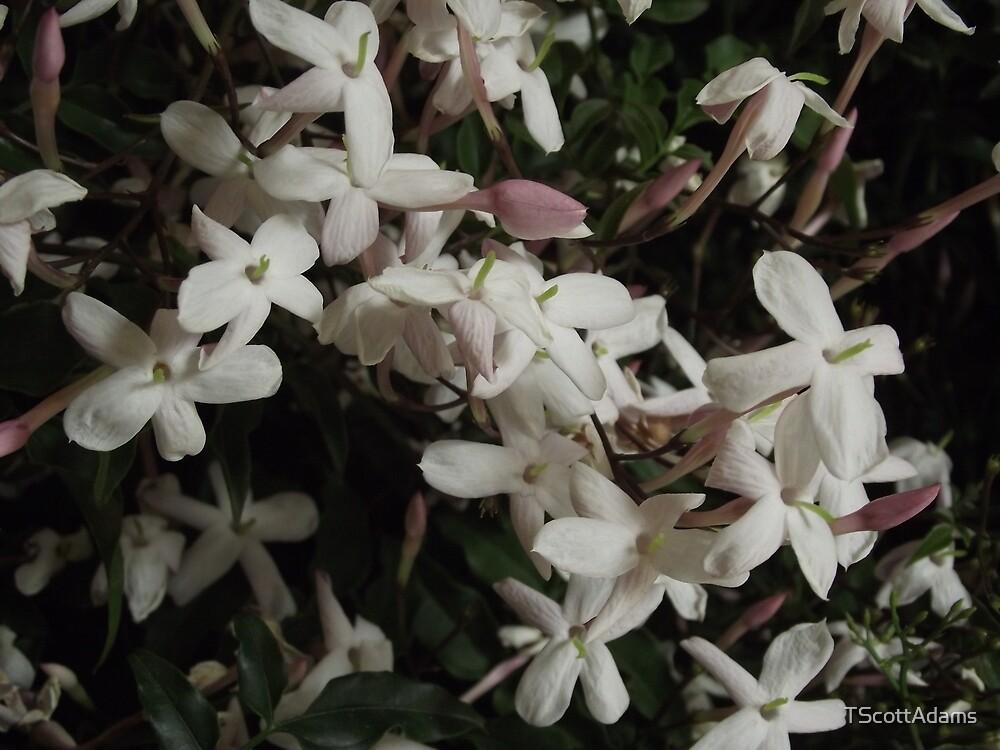 Flower by TScottAdams