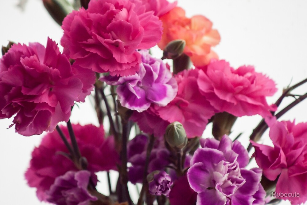 Pink Flowers on White by Rubecula