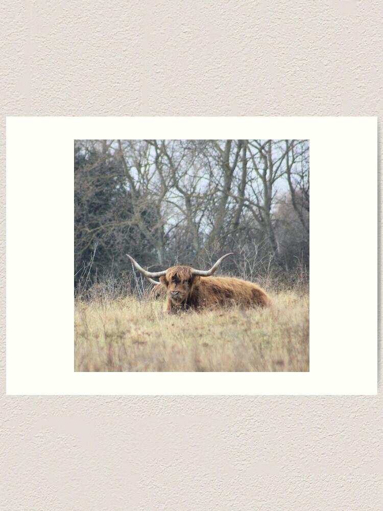 Alternate view of Highland Cattle Art Print