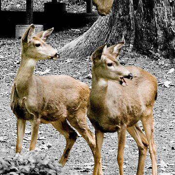 Oh Deer by DaogreerEarth