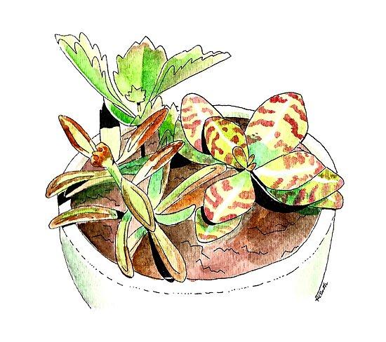 Succulents by Rachel Smith