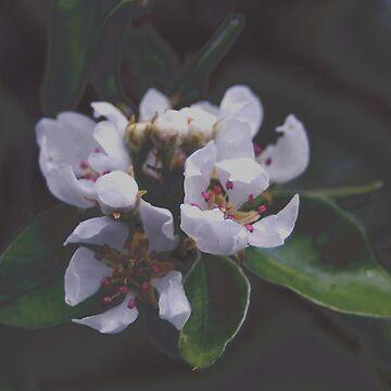 apple blossom by Flamango-wear