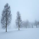 misty trees in the snow by ashley reed