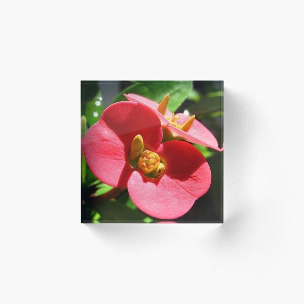 Red Flowers  Acrylic Block