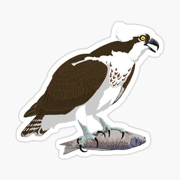 Osprey Sticker