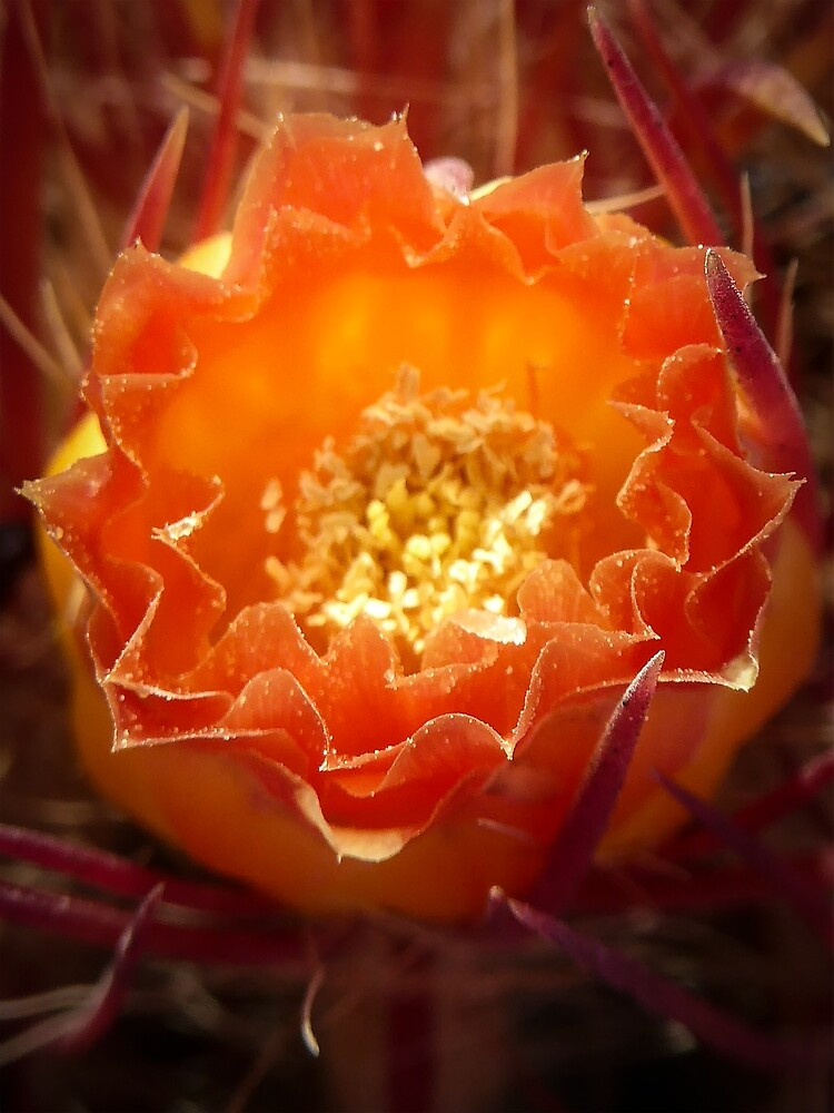 Cactus Bloom by Eric Nagel