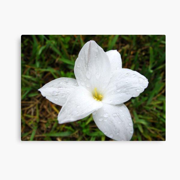 Raindrops on White Flower Canvas Print