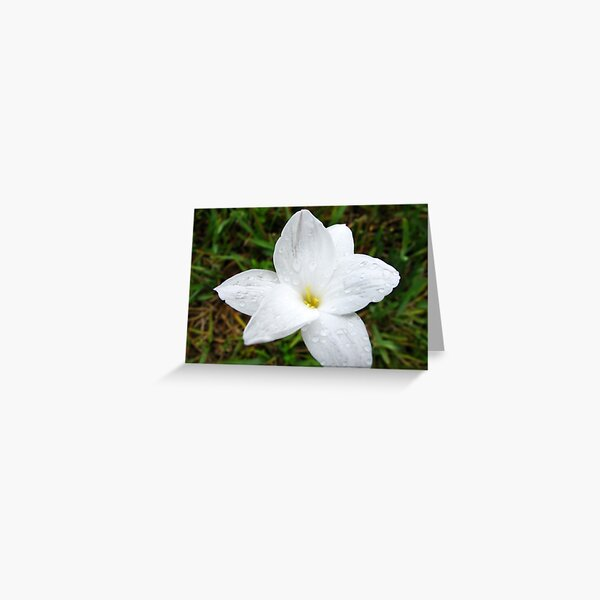 Raindrops on White Flower Greeting Card