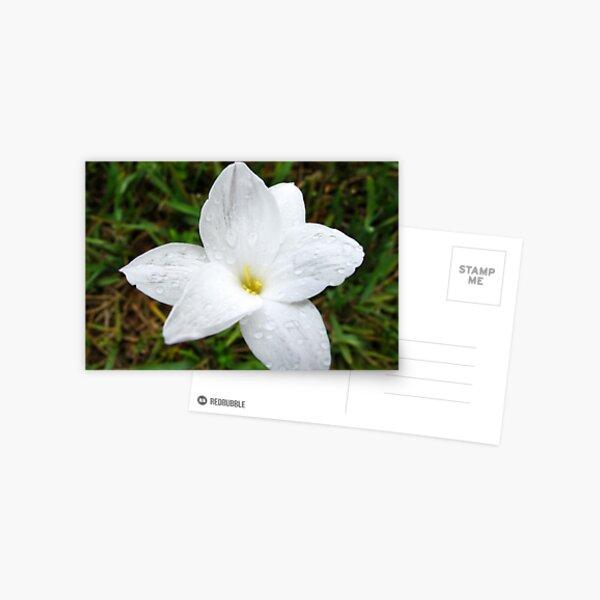 Raindrops on White Flower Postcard