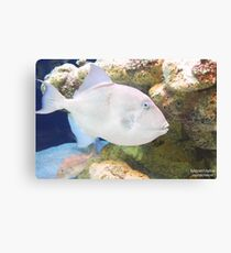 Triggerfish In Reef Canvas Print