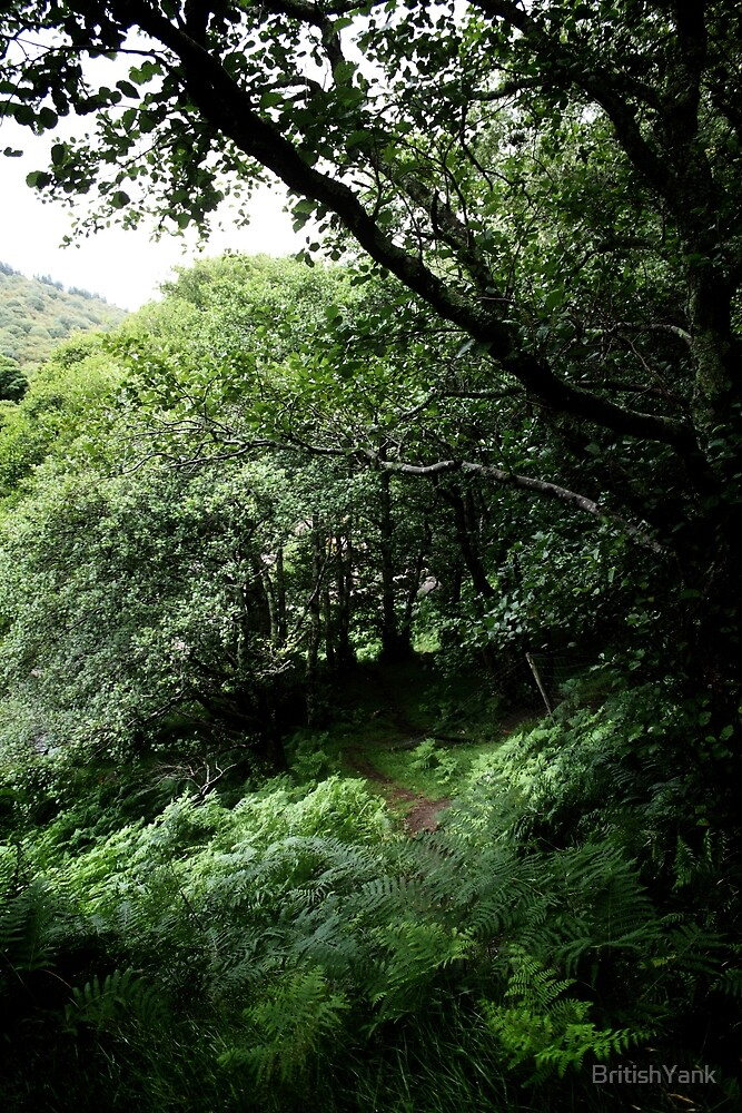 Rain Forest by BritishYank