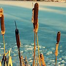 Cattails by NJC Photography