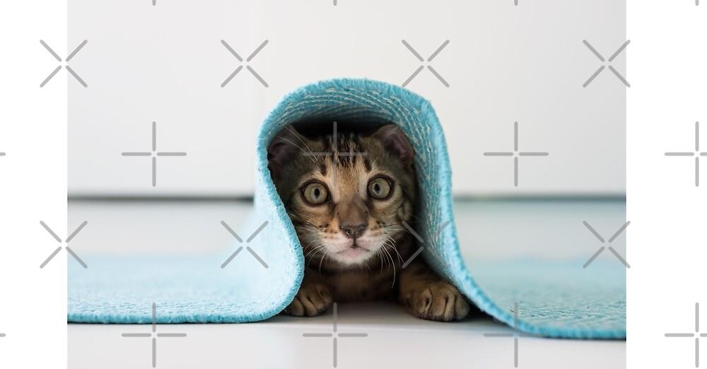 Cat Hiding  by Desire-inspire