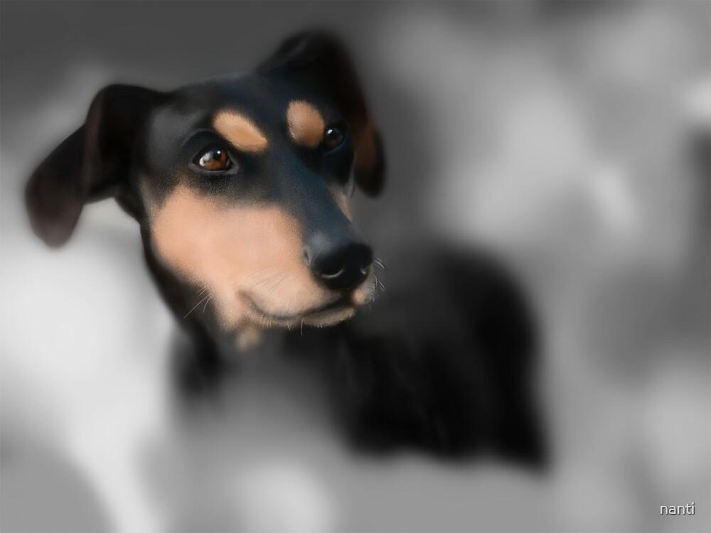 Original Art Digital Dog Painting  by nanti