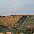 Boulby Cliff Top by dougie1