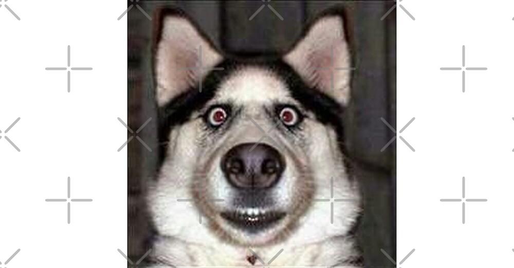 Funny Dog Stare by Desire-inspire