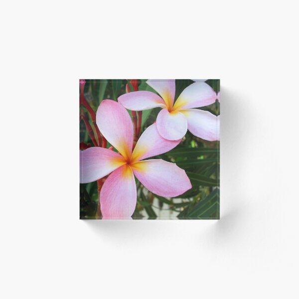 Pink Frangipani (Plumeria) II Acrylic Block