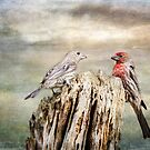 Two Little Love Birds by Barbara Manis
