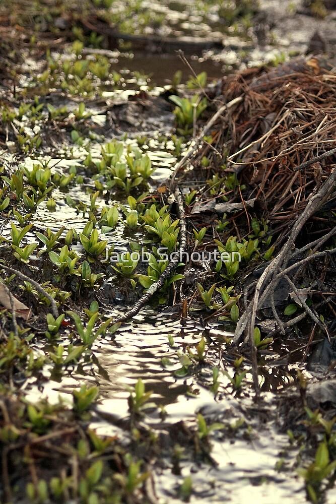 Water Plants 1 by Jacob Schouten