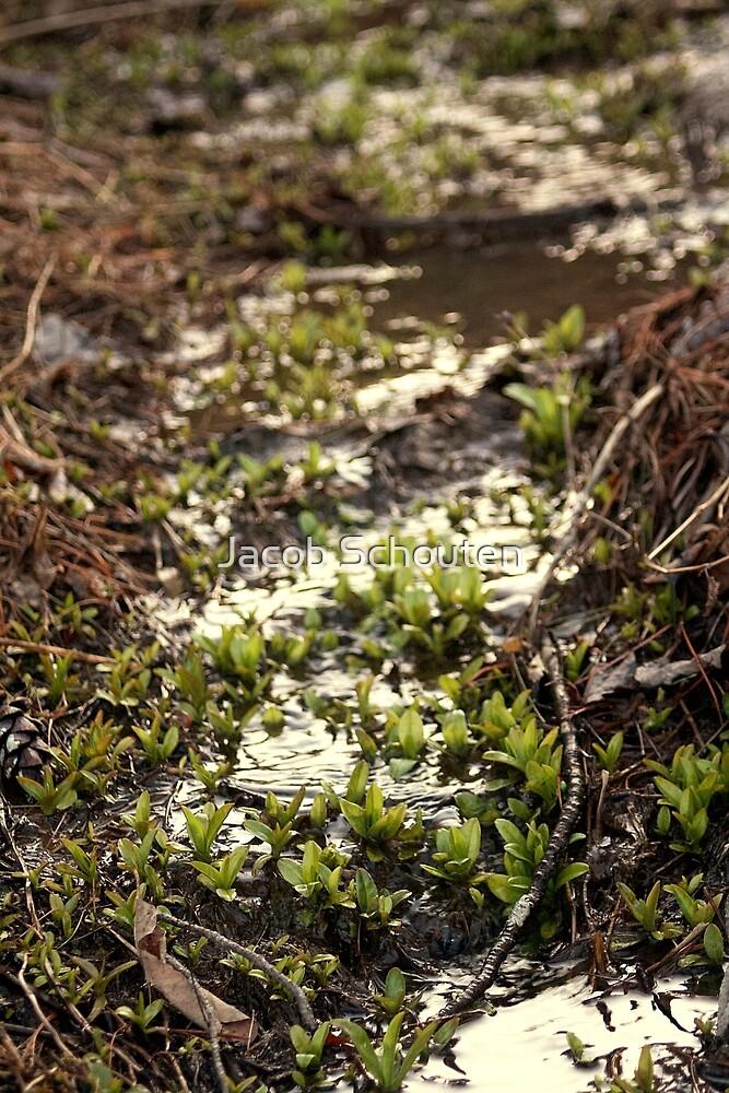 Water Plants 2 by Jacob Schouten