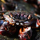 Cooked crab by mrfotos