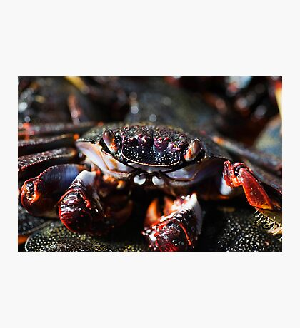 Cooked crab Photographic Print