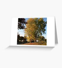 trees in my front yard Greeting Card