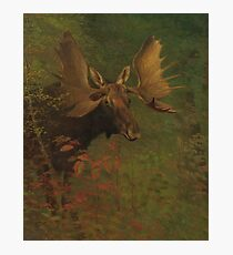 Vintage Painting of a Bull Moose  Photographic Print