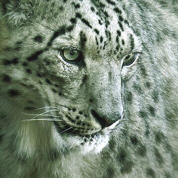 Panthera uncia by JoanofUnknown