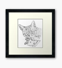 cat playing with toy Framed Print