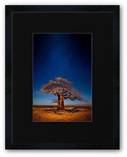Full Moon Fantasy by Mieke Boynton