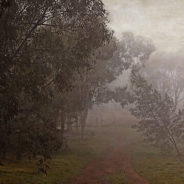 An Autumn Walk in the Fog at the Pinnacle in Canberra/ACT by ausigreybear