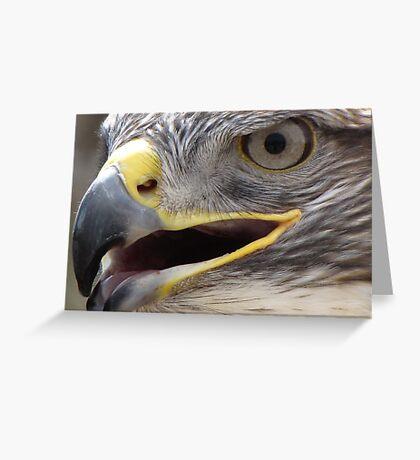 Ferruginous Hawk ~ Extreme Close-Up Greeting Card
