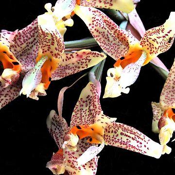 Orchidaceae by JoanofUnknown