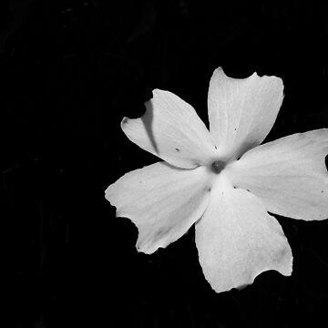 Flora Noir by JoanofUnknown