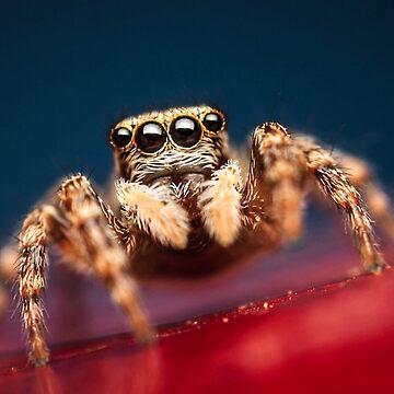 arachnid by hikaif