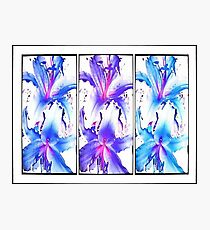 Lilly x3 Photographic Print