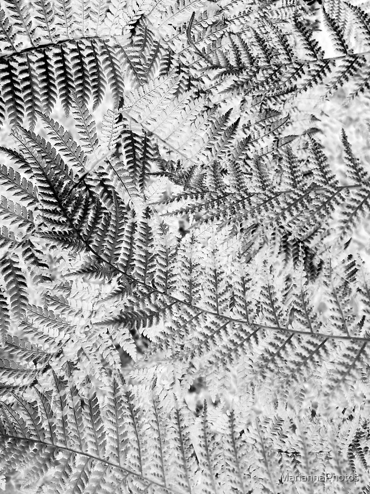 fern pattern by MariannaPhotos