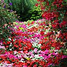 The River of Flowers ~ by lanebrain photography
