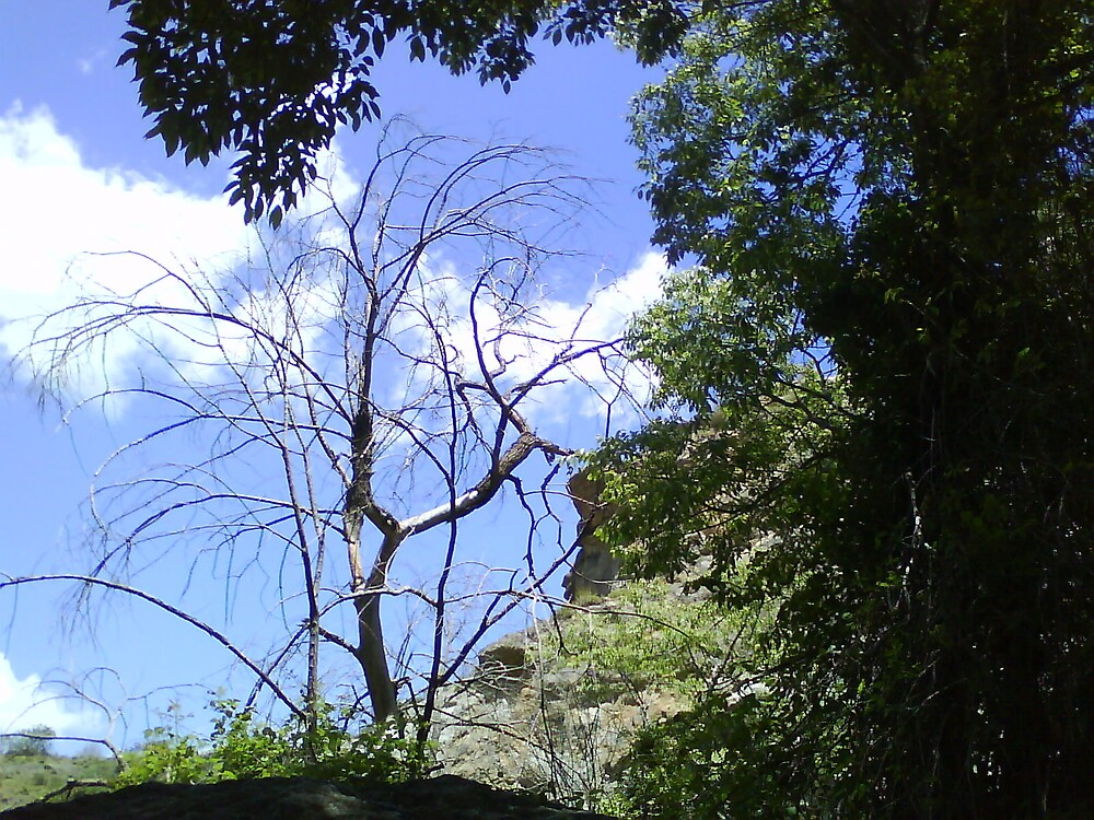 Loney Tree and Blue Sky by Klee