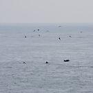 Dolphins near the British Isles by gabriellaksz