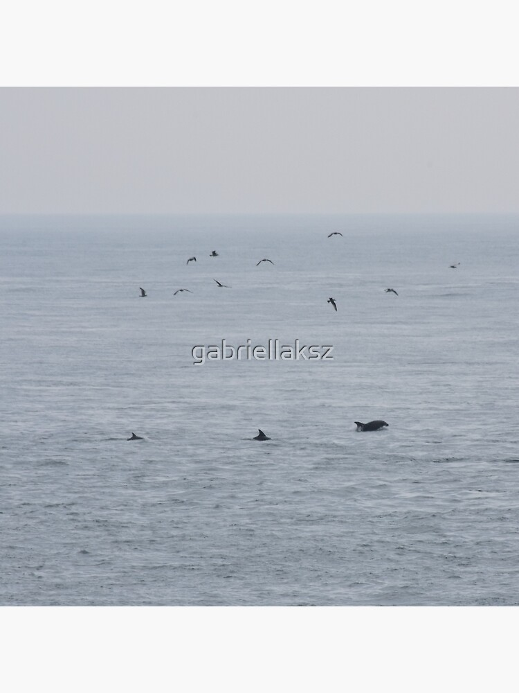 Dolphins near the British Isles by gabriellaksz