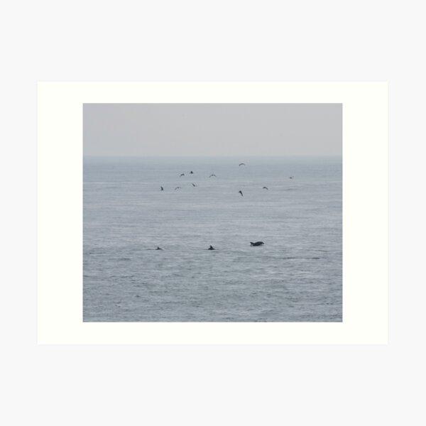 Dolphins near the British Isles Art Print