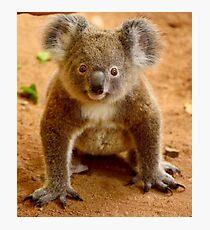 Baby koala Photographic Print