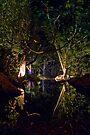 Serpent's Haven - Port Douglas by Jim Worrall