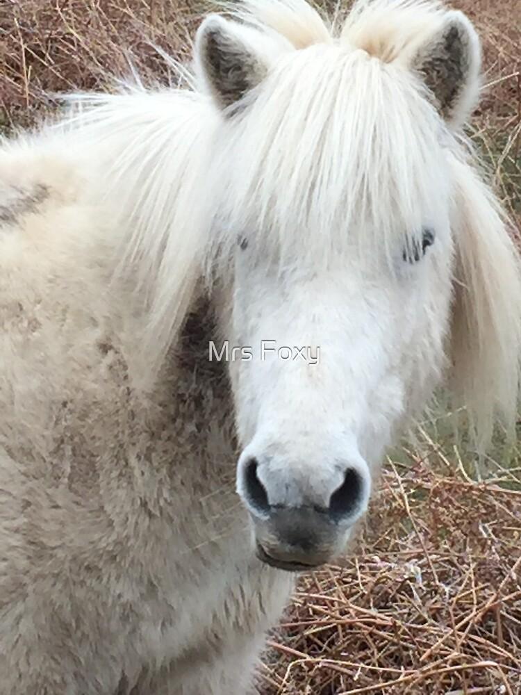 New Forest Shetland Pony by Mrs Foxy