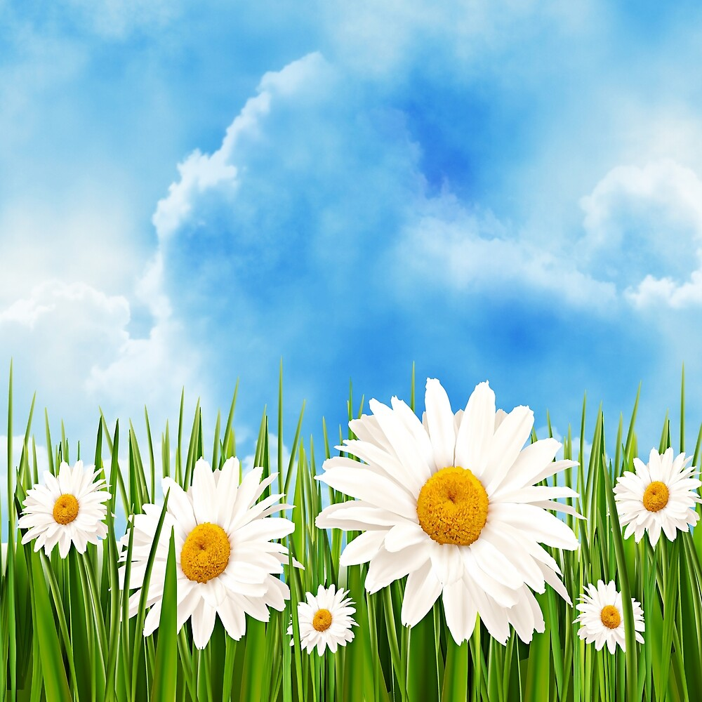 White daisies in a summer meadow against a blue sky by GryThunes