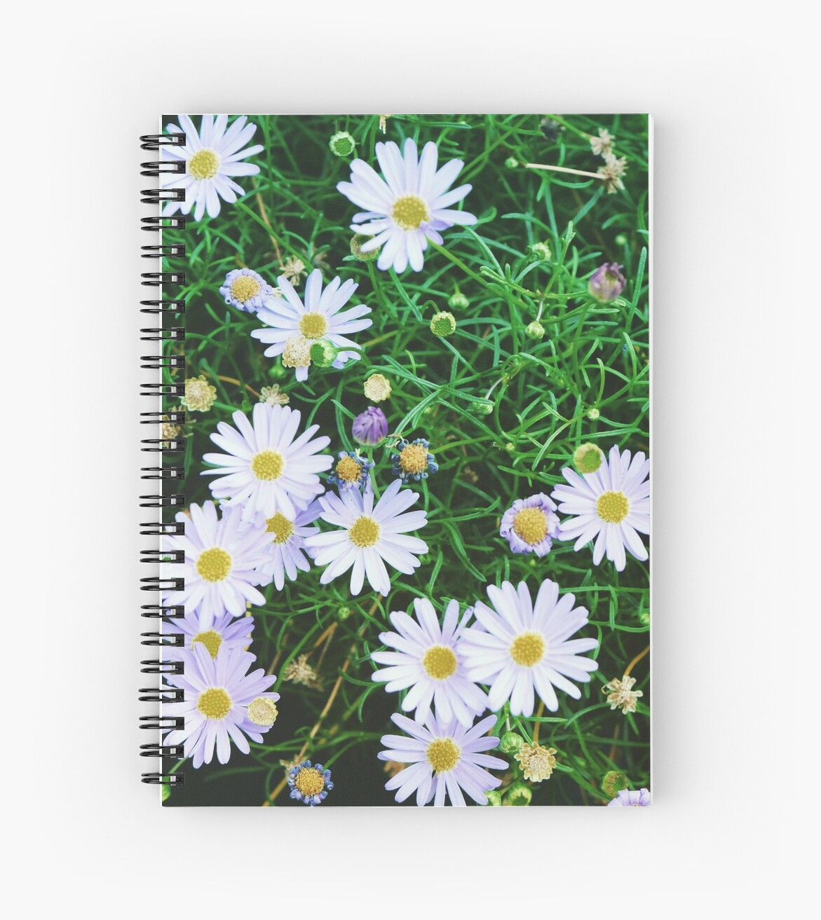 Daisy field by AndreuCalaf